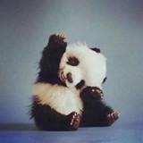 panda_123321