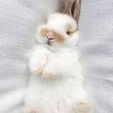 兔歪歪577