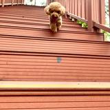 rose5255