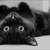 蓝点点的catty