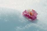 飘絮雪snow