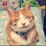 苏苏的猫儿