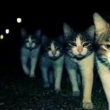 猫猫猫315