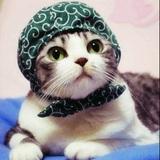 猫猫雨momo