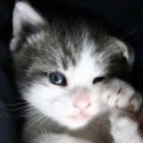 喂不熟的小猫1479187951995651