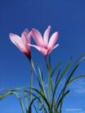 lily为点滴幸福