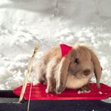 狗狗爱上兔子