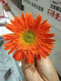 向日葵123-