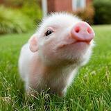猪崽崽1122