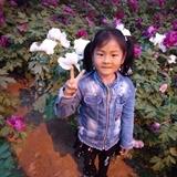 磊aijing