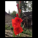 姜义jiang