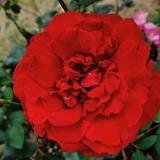 国色天香668850