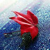 风凉记忆吹成花瓣