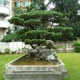zhengzhongguo19851203