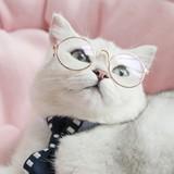快乐的花猫07908053