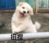 xes涛涛