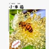 陈氏天然蜂蜜1906