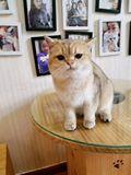 一只贪吃的猫