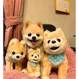 小狗狗93933