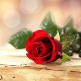 蔷薇的第七夜51737