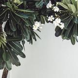 微微花梨木
