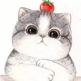 没尾巴的小猫1119