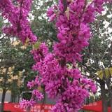 jiaominchao1478911957150357