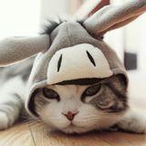 nici猫猫