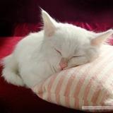 晒暖暖的猫
