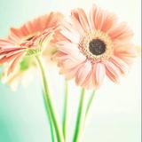 我的幸福朵朵
