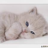 猫儿灰嘟嘟10073