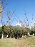 jinsushuang