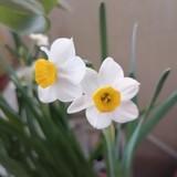 春天夏天2233