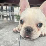 love墨瞳44055