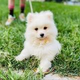 zhumengmeng0709