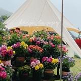 yingruyuan0910