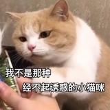 momoko_yuyu