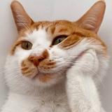 杨泳小catcat