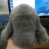 特立独行的兔兔