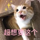 missy_pang