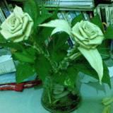 lanlan0516_2008