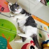猫咪爱睡觉ldr